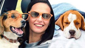 Lidé budou na Valentýna raději se svým psem než partnerem, ukázal výzkum: Čtyřnohý mazlíček je podle nich nikdy nezklame!