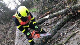 Yulia a Sabine zdevastovaly české lesy. Poničených stromů je přes milion