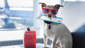 Domácí mazlíčci a cestovní pojištění? Jde to?