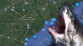 """Hejno lidožravých žraloků připlulo k břehům USA. Láká je """"zdroj kvalitní potravy"""""""