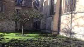Aktivisté popadli rýče a rozkopali univerzitě trávník. Došlápla si na ně policie
