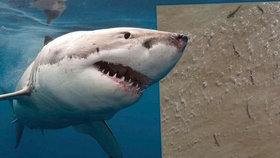 Mladíka u oblíbené pláže zaskočilo hejno žraloků. Skočil na surf a rychle pádloval pryč