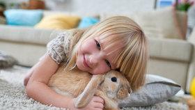 Zakrslý králík jako domácí mazlíček. Vše, co potřebujete vědět