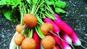 Zahrada v srpnu: Je čas zasít jarní zeleninu!