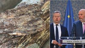 Kůrovcová kalamita v Česku: Konec za 3 až 5 let, míní Brabec. Záleží i na počasí