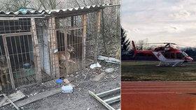 Dominika (6) brutálně potrhal belgický ovčák: Chlapce našli na zahradě nahého!