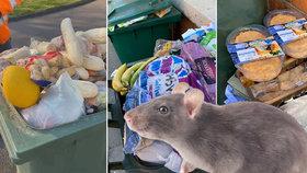 Lidé obchody vykupovali zbytečně: Zásoby jídla končí v popelnicích, města se hemží potkany