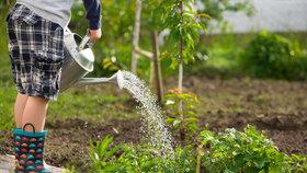 Dešťovou vodu stačí zachytit a správně uchovat. Na boj se suchem přispívá i stát
