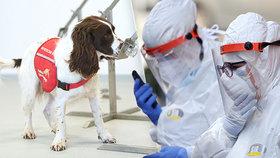 V boji proti viru testují i speciálně vycvičené psy! Kdy budou k dispozici?