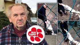 Děsivá přetahovaná o kozlíka se psy. Týrání, mají jasno veterináři. Majitel porušil i další zákony