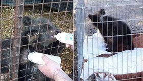 Roztomilá medvíďata překvapila pohraničníky na Zlínsku: Čeká je život v kontaktní zoo
