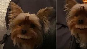 """Video, které obletělo svět: Roztomilý pejsek si  přivlastnil """"zuby po babičce"""""""