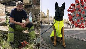 Zvládnou čeští psi vyčenichat koronavirus? Označit by mohli nemocné i infikované povrchy