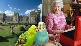 Karanténa podle královny Alžběty II.: Tucet služebných a stovka ptáků!