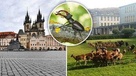 Kamera, klapka, akce! Karanténa pomohla při vzniku unikátního dokumentu o pražské přírodě