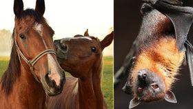 Koronavirus od netopýrů a hrozba i od koní? Biolog radí: Na mrtvá zvířata nesahejte