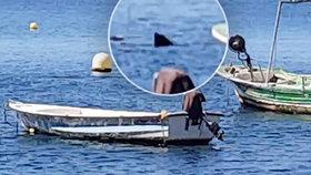 Koronavirus přilákal žraloky do Evropy! U španělského pobřeží natočili obřího predátora
