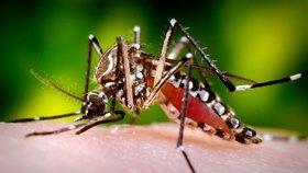 Tropičtí komáři přenášející horečku dengue míří do Evropy, varuje studie. Místy už tu jsou