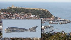 Pandemie prospívá mořskému životu: U břehů Anglie se údajně objevili delfíni!