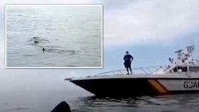 """Osmimetrový žralok připlul k španělským plážím. """"Nechoďte do vody!"""" varovala hlídka"""