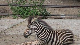 Zoologické zahrady už otevřely i vnitřní prostory: Lidi ale odradil déšť