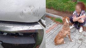 To se jen tak nevidí: Staford na útěku pokousal v Plzni auto!