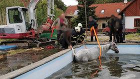 Smutný konec pokusů o záchranu: Kůň u Hořic zemřel po pádu do bazénu