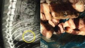 Bestie (61) házela psům v parku pamlsky napíchané hřebíky: Policisté ji chytili při činu!