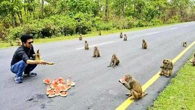 Opičky ukázaly, jak dodržují sociální odstup. Při krmení se držely od sebe
