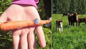 Koním někdo hodil do výběhu mrkev s připínáčky: Nacpu mu ji do pr*ele, vzkázala pachateli majitelka