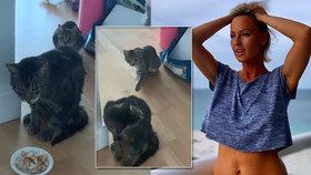 Sexbomba Belohorcová v obavách: Kočka se zasekla ve Frankfurtu! Zachází s ní jako s kufrem