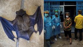 Budou netopýři šířit koronavirus? V Thajsku je to lahůdka, vědci prozkoumají 300 zvířat