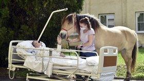"""Pohlazení jako terapie: Pacienty v pražských nemocnicích """"léčí"""" koně i psi, v Motole využívají i strašilky"""