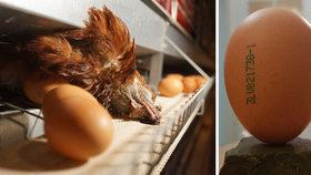 """Drůbežárny tiskly na vajíčka dražší kabát, šokuje reportáž. """"Nemožné,"""" tvrdí komora"""