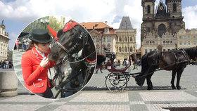 """Týrání koní v centru Prahy? """"Jinde na světě nemají lepší podmínky!"""" říkají povozníci"""