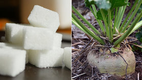 """Kilo cukru pod 10 korun? Šílené, vzkazují pěstitelé. Zdražení je """"návrat k normálu"""""""