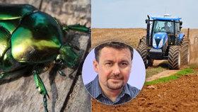 """""""Situace je stále horší."""" V Česku vymírá hmyz, expert promluvil o invazích i sekání trávy"""