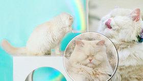 Kočka Moet oslepla kvůli chovateli: Nyní je senzací sociálních sítí!