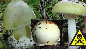 Nejjedovatější muchomůrka světa roste i v českých lesích: Jak ji nezaměnit s holubinkou? Zabije i jediná houba