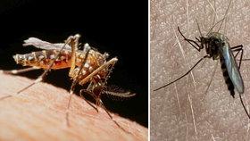 Hrozba v Česku i dovolenkových rájích: Komáry nepodceňujte, přenáší viry a parazity
