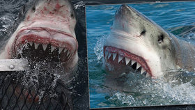 Kde hrozí největší nebezpečí útoku žraloka? V Egyptě už Čecha zabil!