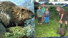 Pepa, Ríša a Honzík zachránili bobra: Propadl se do starého sklepa a nemohl ven