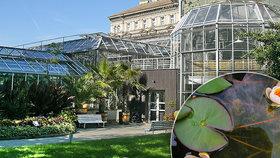 Botanická zahrada na pražském Albertově: Původně sídlila na Smíchově. Proč ji přestěhovali?