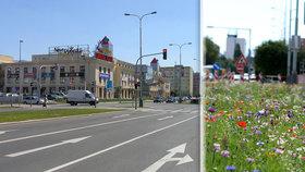 Barevná louka mezi paneláky: Na Novodvorské vysadili letničky, část z nich už někdo omylem posekal