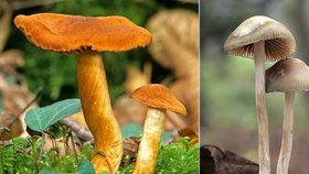 V Česku se houbami ročně přiotráví 400 lidí. Experti radí, na co si dát pozor