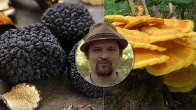 Kde všude rostou výborné jedlé houby? Do lesa klidně s žebříkem, radí mykolog!
