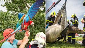 """Zvířecí hasičská patrola: Koně tahali z jímky, papoušek Nela se utrhl """"ze řetězu"""""""