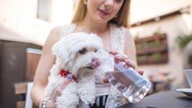 Horko může ublížit také zvířatům. Jak nejlépe ochráníte své mazlíčky?