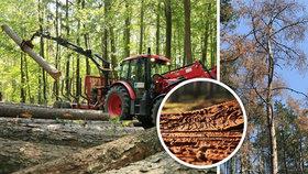 Lesníci o boji s kůrovcem v Praze: Napadené stromy musíme včas pokácet, aby se smrtonosní škůdci nešířili