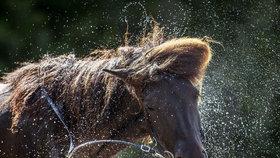 Splašení koně zranili 20 dětí, dvě z nich jsou na tom špatně
